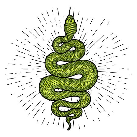 Coiled green snake with rays of light detailed illustration. Tribal serpent isolated over white background. Vector tattoo design.