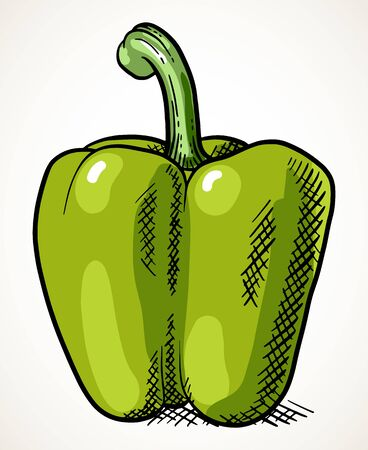 Fresh sweet green pepper. Vegetable design element for farm market, vegetarian food recipe. Vector illustration isolated over white.