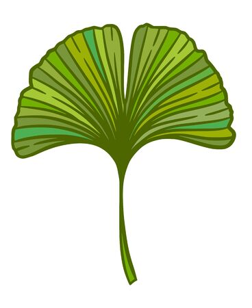 Ginkgo or Gingko Biloba leaf. Nature botanical vector illustration, herbal medicine graphic in green isolated over white. Vettoriali