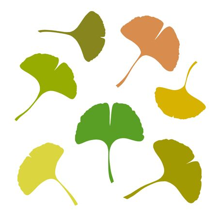 Ginkgo or Gingko Biloba leaves set. Nature botanical vector silhouette illustration, herbal medicine graphic isolated over white.