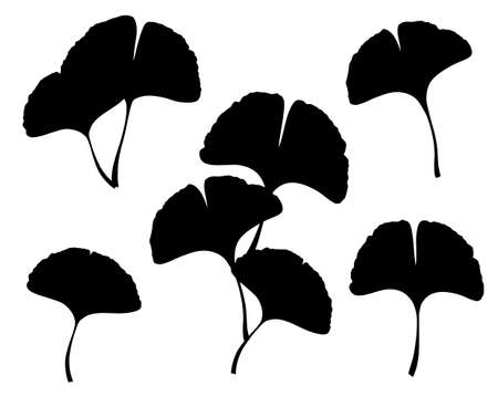 Ginkgo or Gingko Biloba leaves and branches set. Nature botanical vector silhouette illustration, herbal medicine graphic in black isolated over white.
