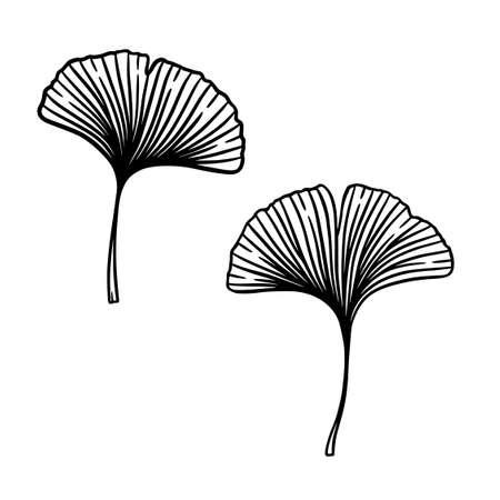 Ginkgo or Gingko Biloba leaves set. Nature botanical vector engraving illustration, herbal medicine graphic in black isolated over white.