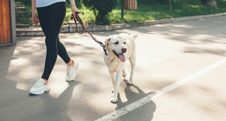 Caucasian girl walking in the park with her labrador during a sunny summer day