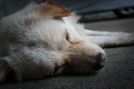 lonely dog