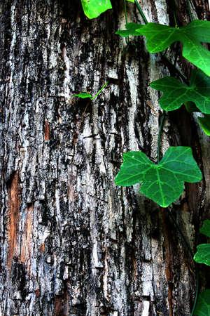 Leaf on the tree Stock Photo - 14212991