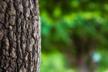 Tree trunk on green background Stock Photo - 14290782