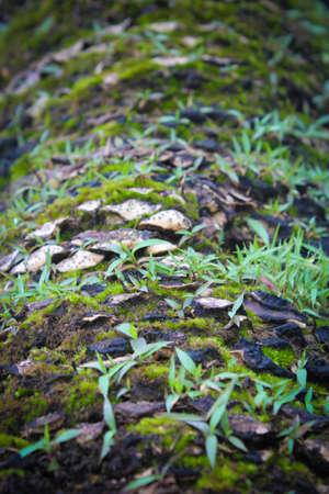 Small Green Fern photo