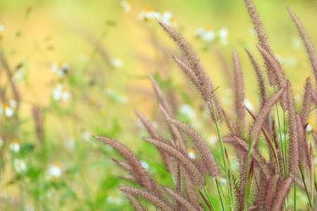 Purple Grass Stock Photo
