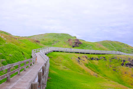 Walk way around the island at Phillip island with beautiful green grass.
