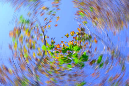 Abstract Spinning looking up view to autumn leaf
