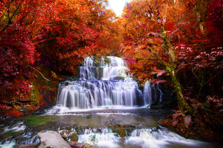 Long Exposure photography. Beautiful waterfall in the rainforest with green nature. Purakaunui Falls, The Catlins, New Zealand. Photoshop changed leaves to red color.