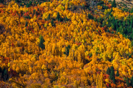 Beautiful colorful green yellow orange and red autumn trees forest on the hill. 免版税图像