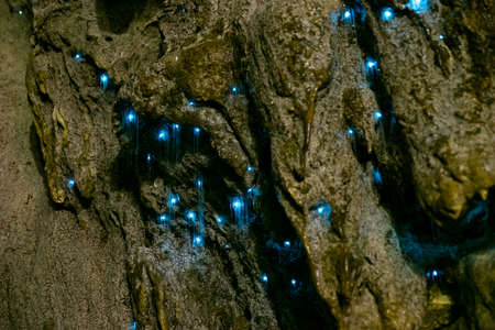 Amazing New Zealand Tourist attraction glowworm luminous worms in caves. High ISO Photo.. 스톡 콘텐츠