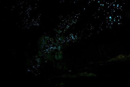 Incroyable attraction touristique de la Nouvelle-Zélande vers lumineux vers luisants dans les grottes. Photo ISO élevée.. Banque d'images
