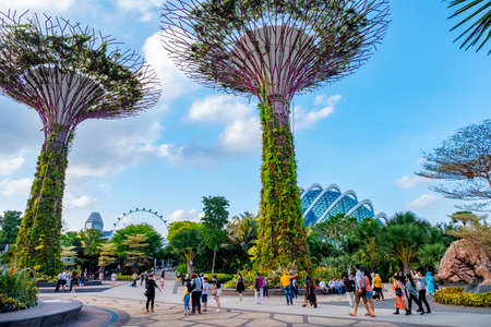 2019 March 1st, Singapore, Garden by the bay - View of the supertrees and people are doing their activities.. 新聞圖片