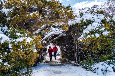 People walking through a trees tunnel covered with snow after a snowy day. 版權商用圖片