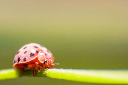 A ladybug, Depth of field shot focused on the eye, Macro Photograph.