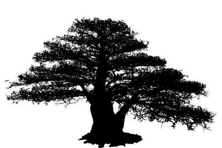 Bonsai-Baum isoliert auf weißem Hintergrund