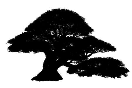 Black Silhouette Tree Isolated on white background