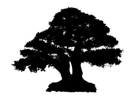 Zwarte silhouetboom die op witte achtergrond wordt geïsoleerd
