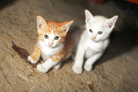 Two young cats looking