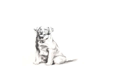 paintings: Dog paintings on white paper Stock Photo