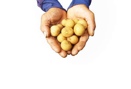 growers: Longan growers in hand isolated white background