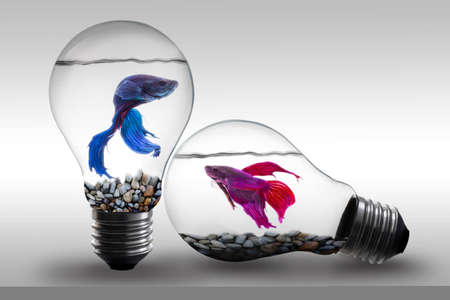 Fish in water inside an electric light bulb Concept and Idea background Foto de archivo