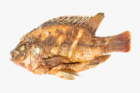 Fried Tilapia isolated white background.