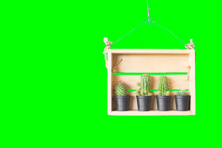 Cactus in a wooden box hanging with a wire isolated green background. Stock Photo