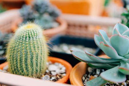 Soft focus and Blur. Minimal creative still life cactus tropical background modern art, filter photo vintage tone