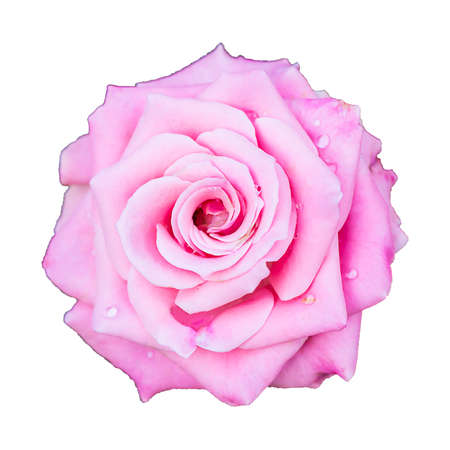 rose Valentine day love isolated on white background