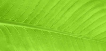 Green leaf pattern nature background
