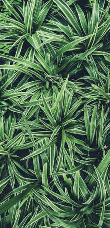 Green leaves plant pattern for background, fresh spring beautiful nature as vivid color leaf and wallpaper .Environment Stock fotó