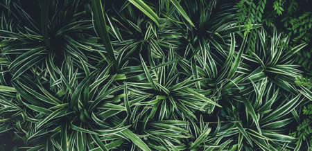 Green leaves plant pattern for background, fresh spring beautiful nature as vivid color leaf and wallpaper .Environment