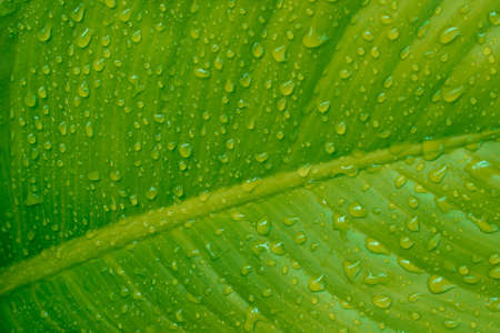 Rain drop on green leaf texture nature background.