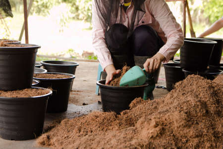 People gardening. Man planting gardens vegetables, Soil preparation agriculture gardener hobby plants at home and outdoor. plants in pots working. farm 版權商用圖片