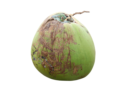 Green Coconut photo