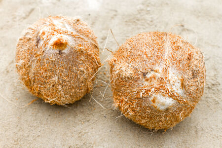 Raw Coconut without Skin photo