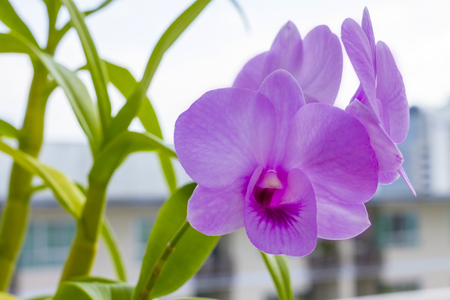 evident: Orchids are easily distinguished from other plants, as they share some very evident apomorphies. Stock Photo