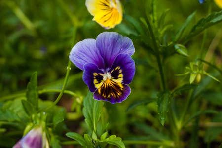 Purple butterfly-like flower