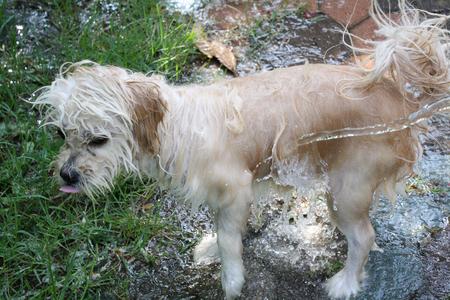Bath dog