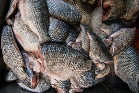 niloticus: Fresh raw tilapia fish on ice tray. Tilapia Nilotica, Oreochromis niloticus.