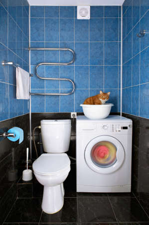 wash basin: Amusing photo of the cat sitting in a basin in a bathroom Stock Photo