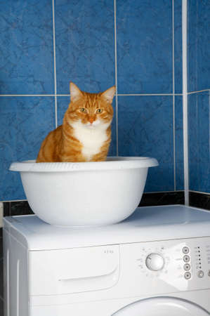 Amusing photo of the cat sitting in a basin in a bathroom photo