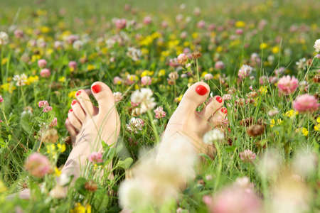 human toe: Female feet with a pedicure on a summer blossoming lawn Stock Photo