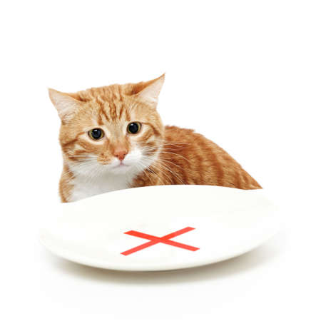 interdiction: Cat sits and looks at a plate with an interdiction, isolated