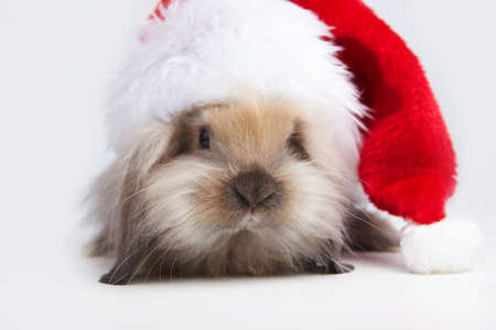 bunny xmas: A small rabbit in the hat of Santa Claus Stock Photo