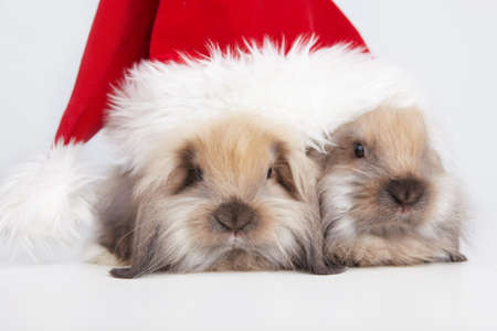 Two little rabbit in a Christmas cap photo