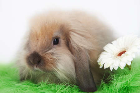 Little funny rabbit with flower on grass photo